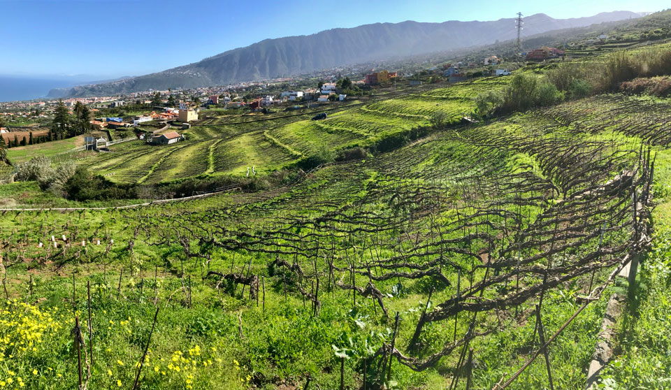 Suertes del Marques has been credited with setting off Tenerife's winemaking revolution.