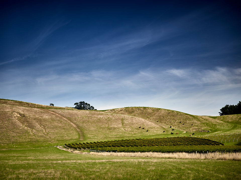 A vineyard at Te Awanga Estate