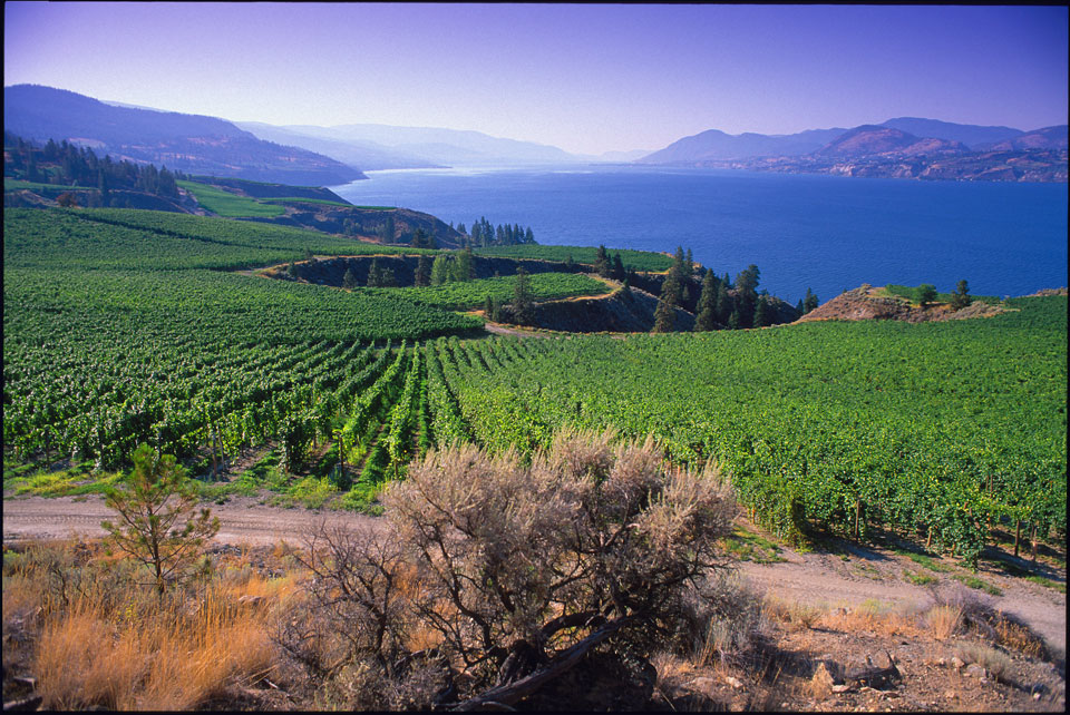 Lake Okanagan acts to temper the climate extremes.