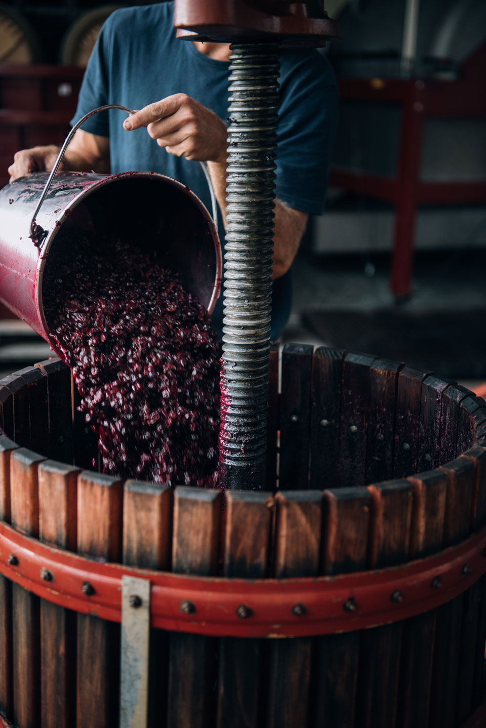 Grapes going into a  basket press.
