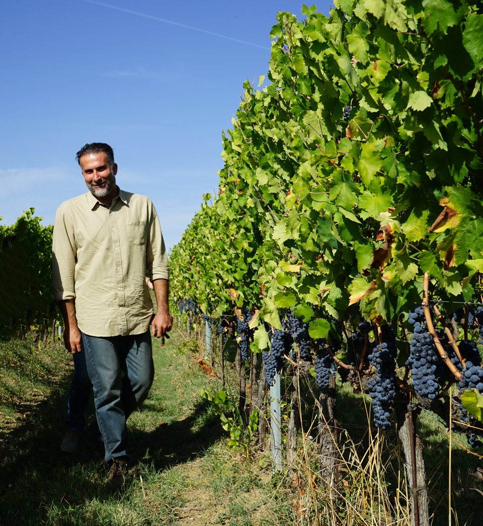 Viticulturist Stefano Dini was key in securing the fruit.