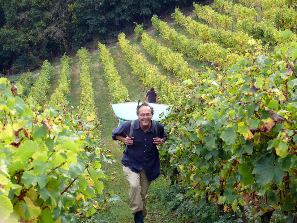 Nicolas Joly is hands-on with harvest.